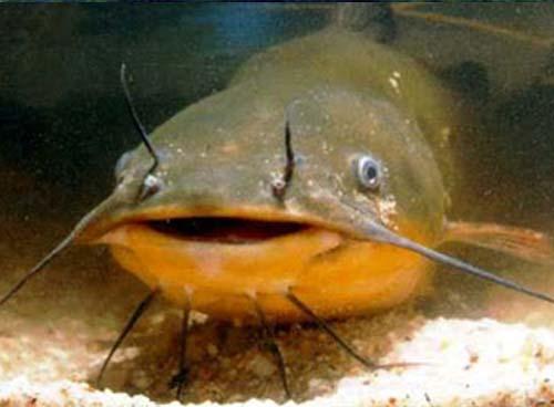 Il pesce gatto e l autoclave i diari di malidor for Contenitore per pesci