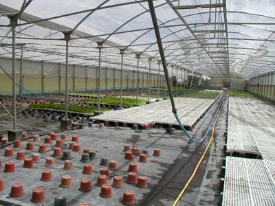 Vivaio Forestale Sicilia : Alcantara centro per piante officinali